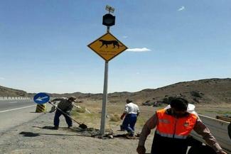 تابلو های هشدار عبور یوزپلنگ در جاده سمنان (عکس)