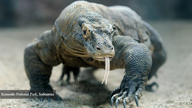 10.Komodo National Park_ Indonesia