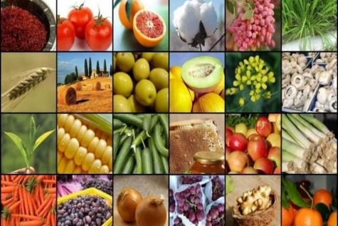 Iran among top ten states in producing agricultural products