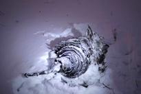 عکس/ قطعهای از هواپیمای روسیه پس از سقوط