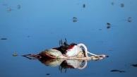 شرق خلیج گرگان درگیر مرگ پرندگان مهاجر شد