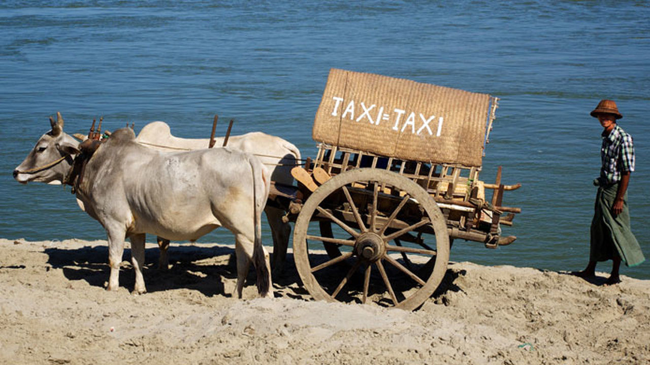 تاکسی گاو نر / Oxs Taxi