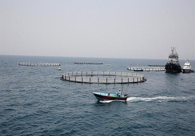 صادرات ماهیان در قفسهای دریایی رونق میگیرد