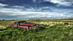 عکسهای خلاقانه از خودروهای فرسوده و اوراقی رها شده در طبیعت