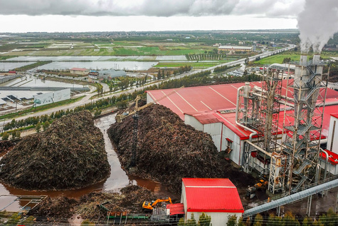 تخریب شدید جنگلهای مازندران توسط بنگاههای معاملات چوب