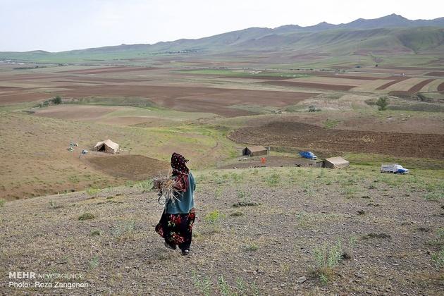 تخریب ۲۰۰ کیلومتر ایلراه در همدان