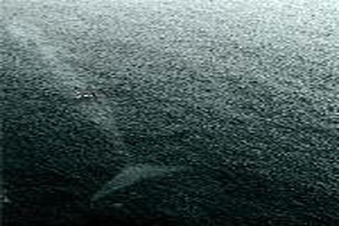 نفسگیرترین عکس دریایی سال ۲۰۱۵