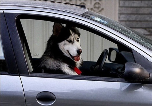 برخورد پلیس با سگ گردانی آغاز شد