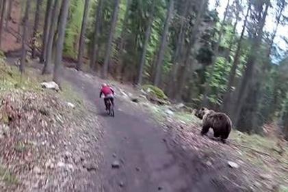 فیلم| غافلگیری دوچرخه سوار توسط یک خرس!