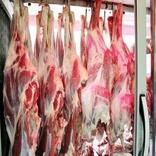 امکان ارائه گوشت 50هزارتومانی به بازار