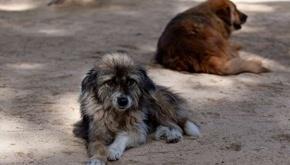 آیا حیوانات قبل از انسان، زلزله را تشخیص میدهند؟