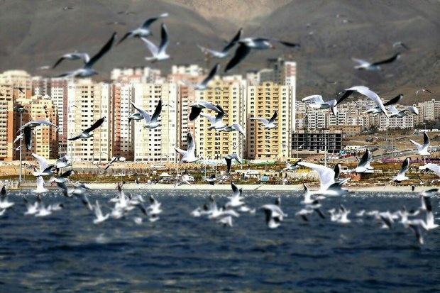 بهکارگیری موتورسیکلت های برقی در مجموعه دریاچه شهدای خلیج فارس