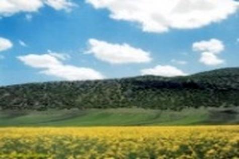 بهزودی در فرودگاه کرمانشاه ویزای ۱۵ روزه صادر میشود