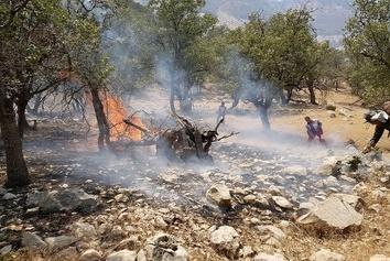 فیلم   فرار حیوانات از ترس آتش سوزی در منطقه خائیز