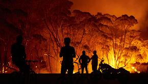 تصاویر| نیم میلیارد گونه جانوری و گیاهی در جنگلهای استرالیا سوختند